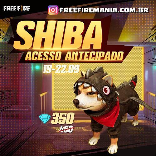Shiba Pet